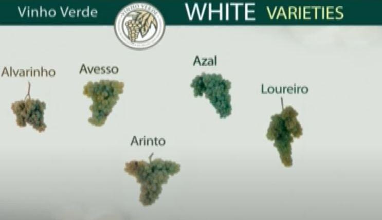 Vinho verde rypäleet